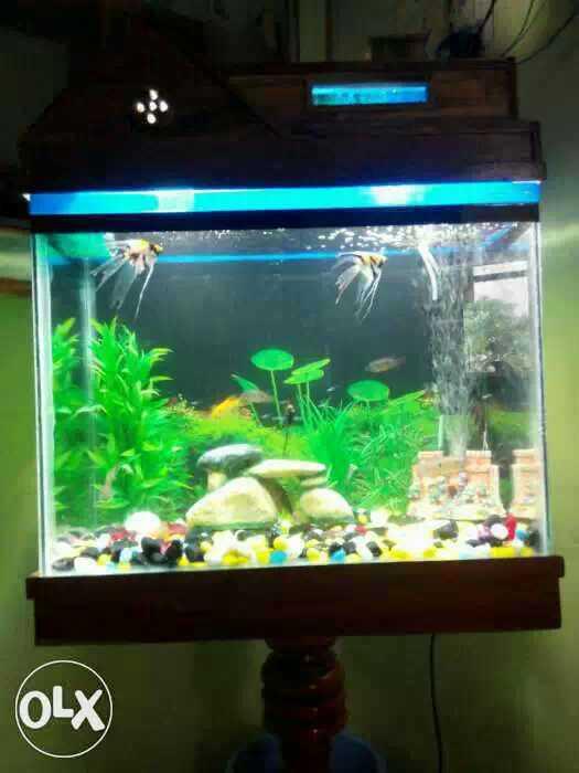 All Type Of Fish Aquarium