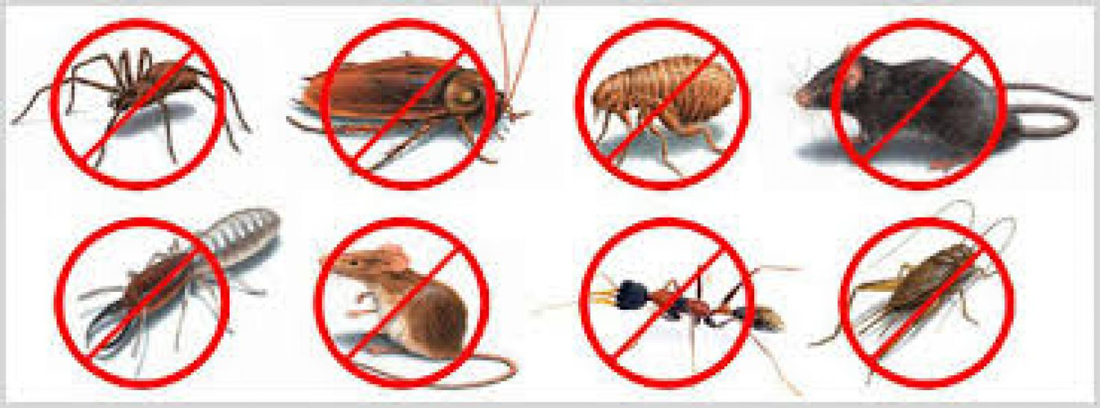 Rajiv Sen    Pest Control